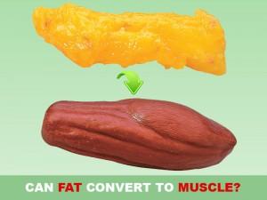 تبدیل چربی به عضله