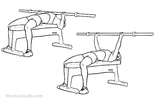 پرس سینه هالتر برای سفت شدن عضلات  سینه