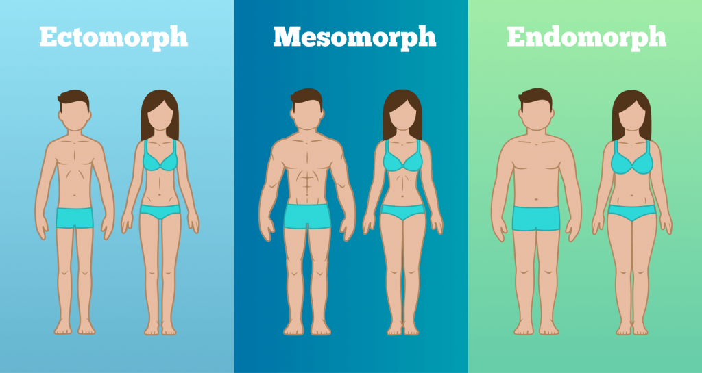 تیپ بدنی یا سوماتوتایپ چیست اکتومورف مزومورف اندومورف