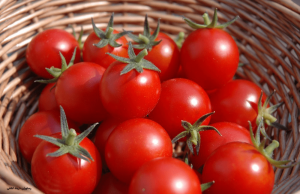 گوجه فرنگی ریکاوری